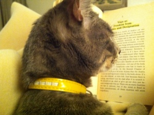 MIAO READING