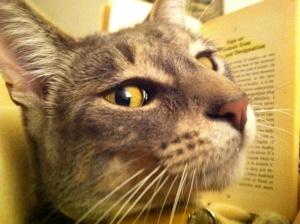 READING MIAO